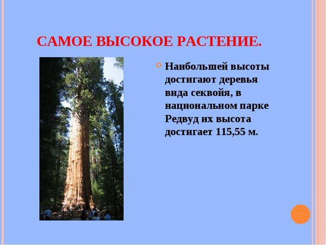 САМОЕ ВЫСОКОЕ РАСТЕНИЕ. Наибольшей высоты достигают деревья вида секвойя, в н...