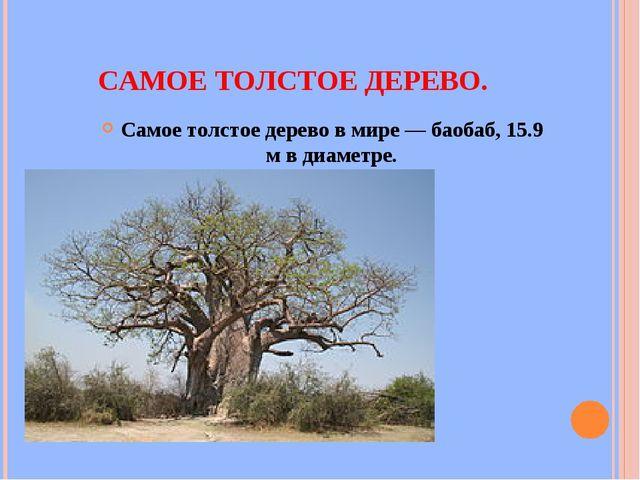 САМОЕ ТОЛСТОЕ ДЕРЕВО. Самое толстое дерево в мире — баобаб, 15.9 м в диаметре.