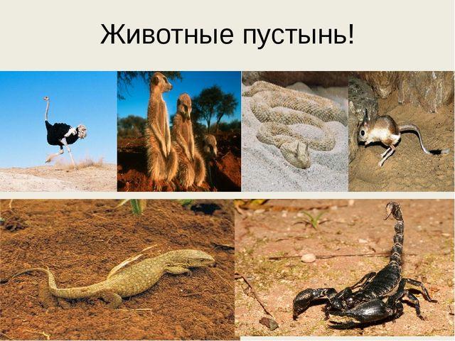 Животные пустынь!