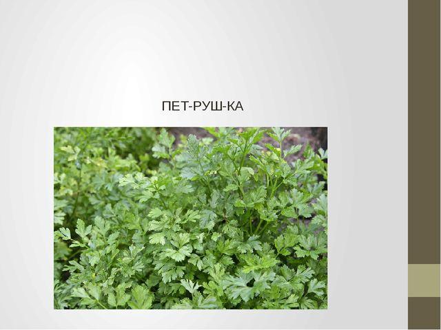 ПЕТ-РУШ-КА