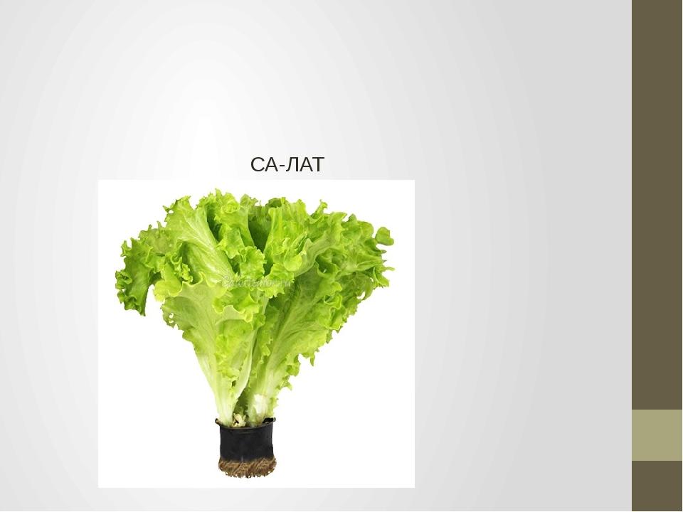 СА-ЛАТ