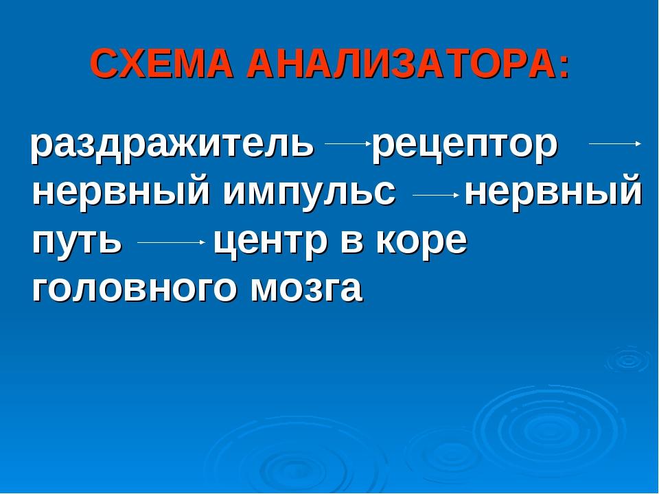 СХЕМА АНАЛИЗАТОРА: раздражитель рецептор нервный импульс нервный путь центр в...
