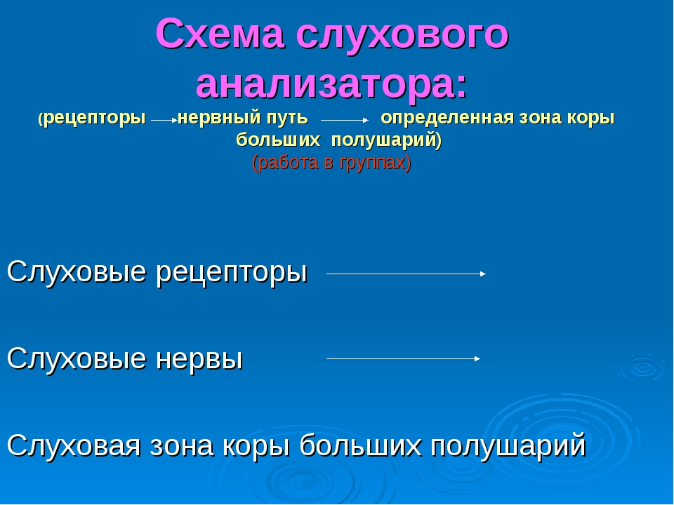 Схема слухового анализатора: (рецепторы нервный путь определенная зона коры б...