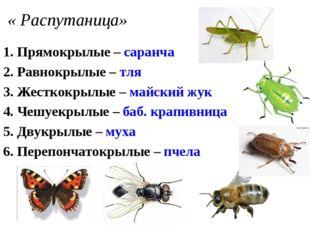 « Распутаница» 1. Прямокрылые – саранча 2. Равнокрылые – тля 3. Жесткокрылые