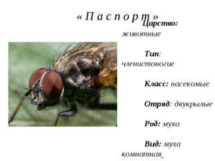 « П а с п о р т » Царство: животные Тип: членистоногие Класс: насекомые Отря