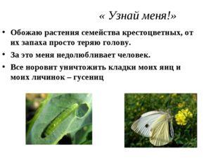 « Узнай меня!» Обожаю растения семейства крестоцветных, от их запаха просто