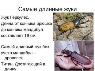 Самые длинные жуки Жук Геркулес. Длина от кончика брюшка до кончика мандибул