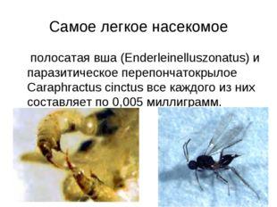 Самое легкое насекомое полосатая вша (Enderleinelluszonatus) и паразитическое