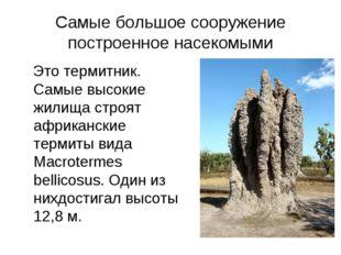 Самые большое сооружение построенное насекомыми Это термитник. Самые высокие