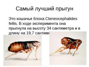 Самый лучший прыгун Это кошачья блоха Cteneocephalides fellis. В ходе экспери