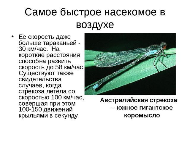 Самое быстрое насекомое в воздухе Ее скорость даже больше тараканьей - 30 км/...