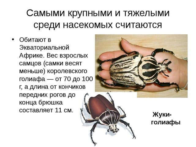 Самыми крупными и тяжелыми среди насекомыхсчитаются Обитают в Экваториальной...