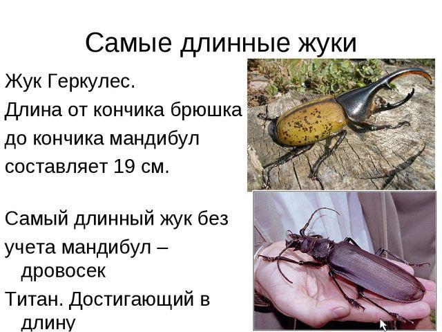 Самые длинные жуки Жук Геркулес. Длина от кончика брюшка до кончика мандибул...