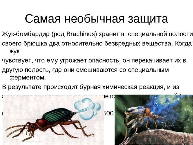Самая необычная защита Жук-бомбардир (род Brachinus) хранит в специальной пол...