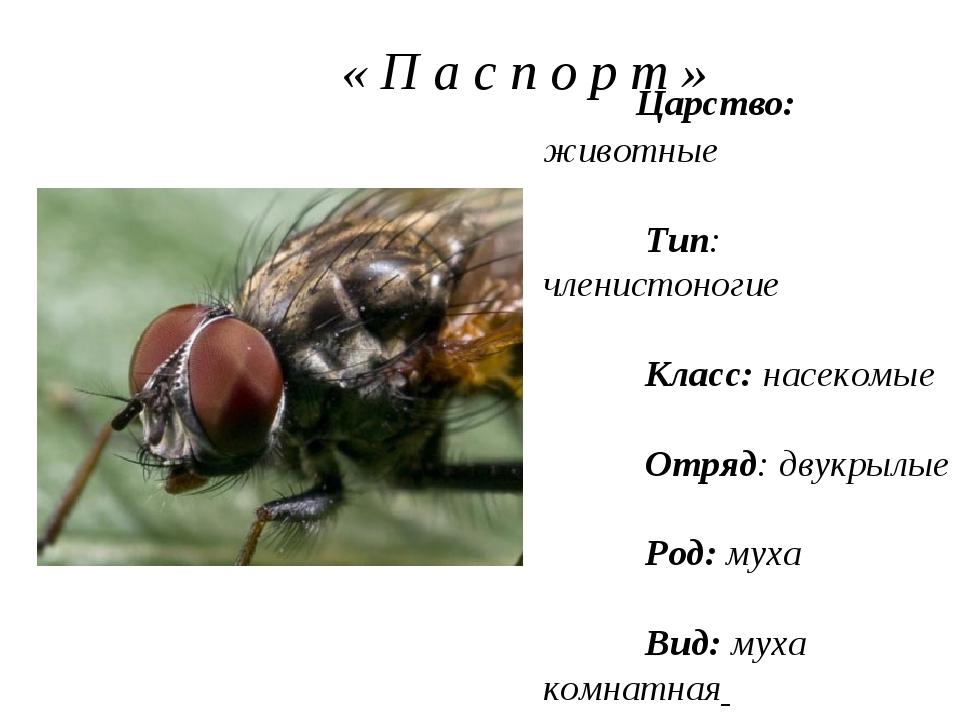 « П а с п о р т » Царство: животные Тип: членистоногие Класс: насекомые Отря...