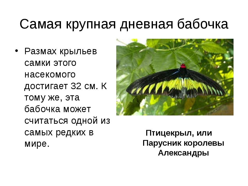 Самая крупная дневная бабочка Размах крыльев самки этого насекомого достигает...