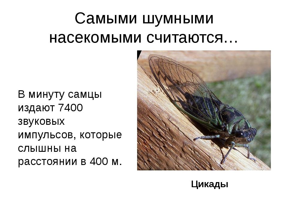 Самыми шумными насекомымисчитаются… В минуту самцы издают 7400 звуковых импу...
