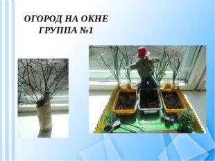ОГОРОД НА ОКНЕ ГРУППА №1