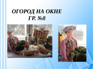 ОГОРОД НА ОКНЕ ГР. №8