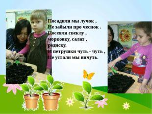 Посадили мы лучок , Не забыли про чеснок . Посеяли свеклу , морковку, салат ,
