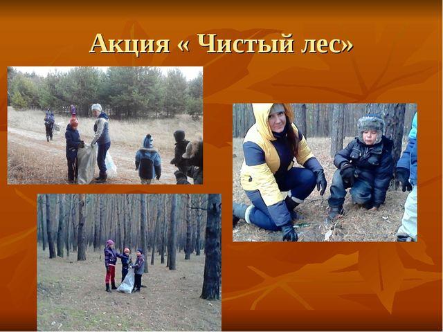 Акция « Чистый лес»