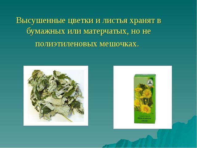 Высушенные цветки и листья хранят в бумажных или матерчатых, но не полиэтиле...