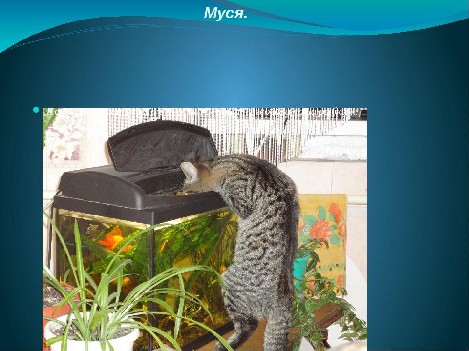 Муся. Кошка-Муся зашла к нам в гости. Её заинтересовали наши рыбки….