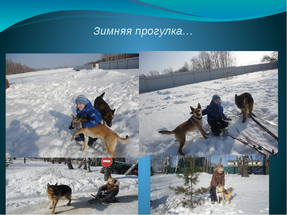 Зимняя прогулка…