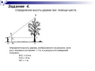 Определите высоту дерева, изображенного на рисунке, если рост человека состав
