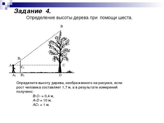 Определите высоту дерева, изображенного на рисунке, если рост человека состав...