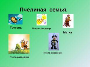 Пчелиная семья. Матка Пчела-сборщица Трутень Пчела-охранник Пчела-разведчик