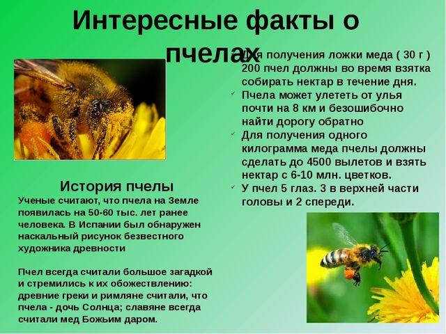 История пчелы Ученые считают, что пчела на Земле появилась на 50-60 тыс. лет...
