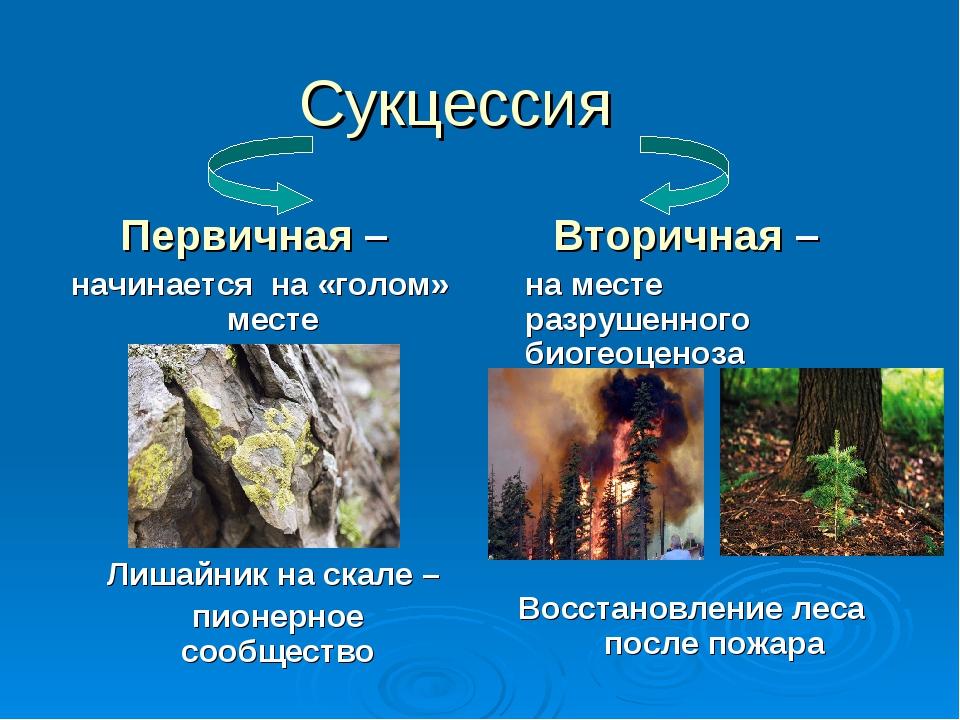 Сукцессия Первичная – начинается на «голом» месте Лишайник на скале – пион...
