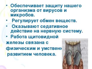 Функции щитовидной железы Обеспечивает защиту нашего организма от вирусов и м