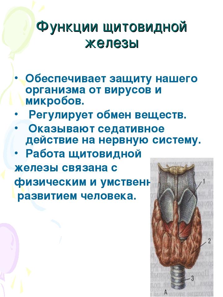 Функции щитовидной железы Обеспечивает защиту нашего организма от вирусов и м...