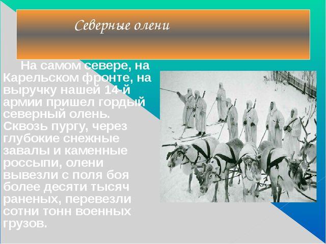 На самом севере, на Карельском фронте, на выручку нашей 14-й армии пришел го...