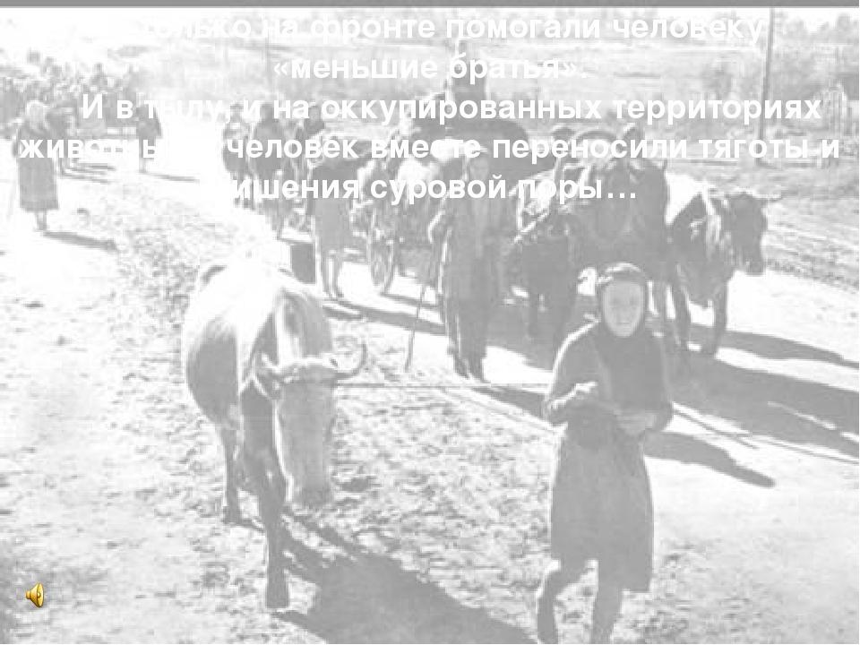 Не только на фронте помогали человеку «меньшие братья». И в тылу, и на оккуп...