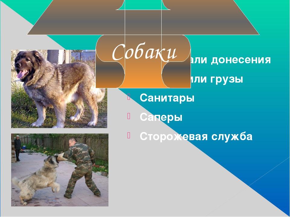 Передавали донесения Перевозили грузы Санитары Саперы Сторожевая служба Собаки