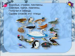 Воробьи, стрижи, пингвины, Снегири, грачи, павлины, Попугаи и синицы Одним сл