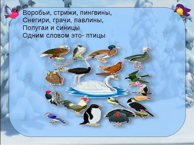 Воробьи, стрижи, пингвины, Снегири, грачи, павлины, Попугаи и синицы Одним сл...