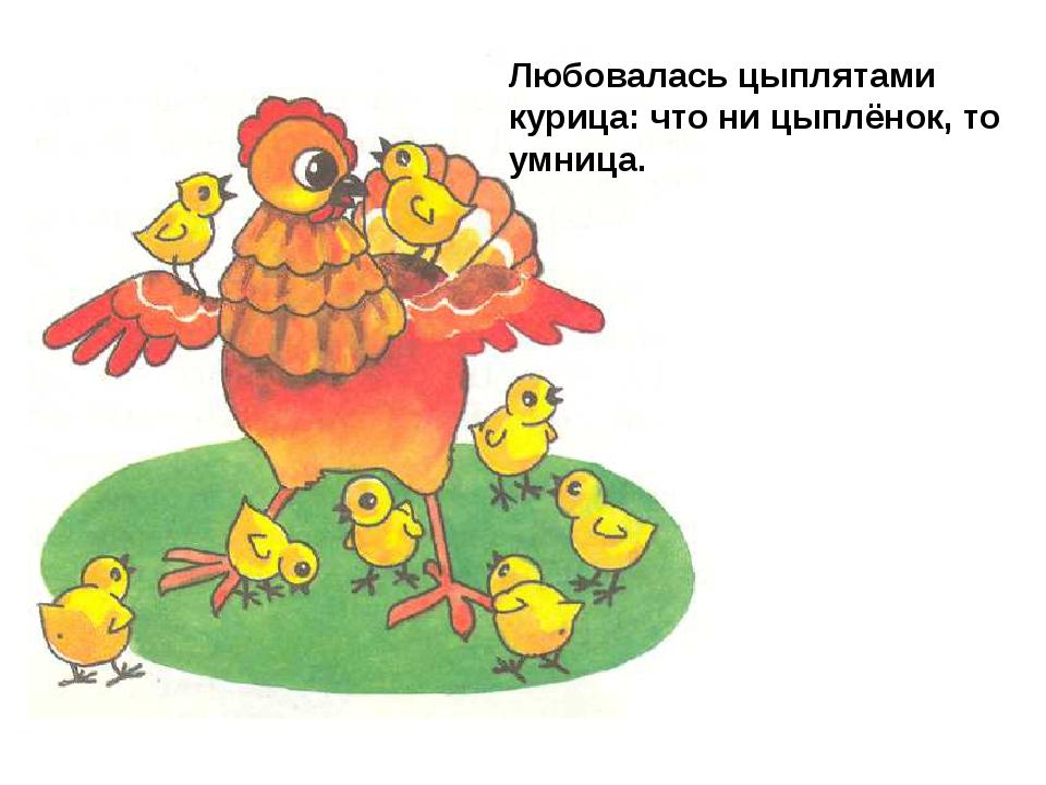 Любовалась цыплятами курица: что ни цыплёнок, то умница.