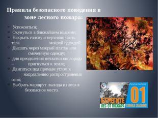 Правила безопасного поведения в зоне лесного пожара: Успокоиться; Окунуться в