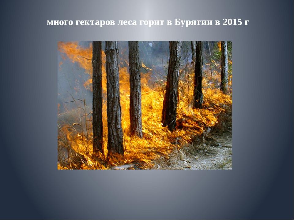 много гектаров леса горит в Бурятии в 2015 г