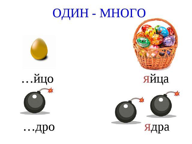 ОДИН - МНОГО …йцо яйца …дро ядра
