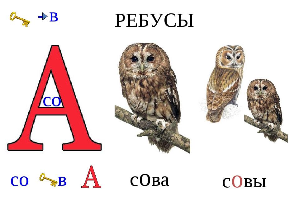 РЕБУСЫ - в совы сова со со в