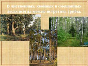 В лиственных, хвойных и смешанных лесах всегда можно встретить грибы.