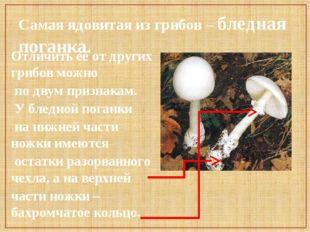 Самая ядовитая из грибов – бледная поганка. Отличить её от других грибов можн