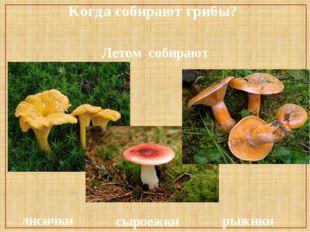Когда собирают грибы? Летом собирают лисички сыроежки рыжики