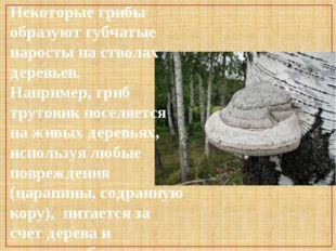 Некоторые грибы образуют губчатые наросты на стволах деревьев. Например, гриб