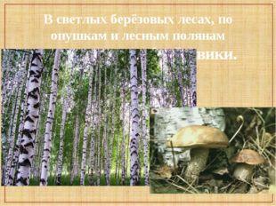В светлых берёзовых лесах, по опушкам и лесным полянам встречаются подберёзов